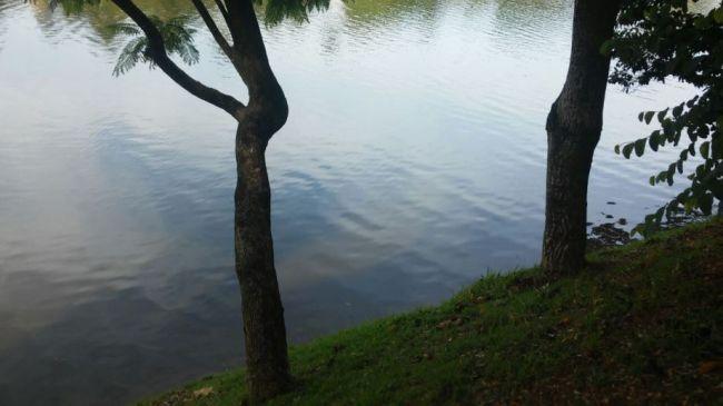 Lagoa da Pampulha mais bonita, Enzilimp