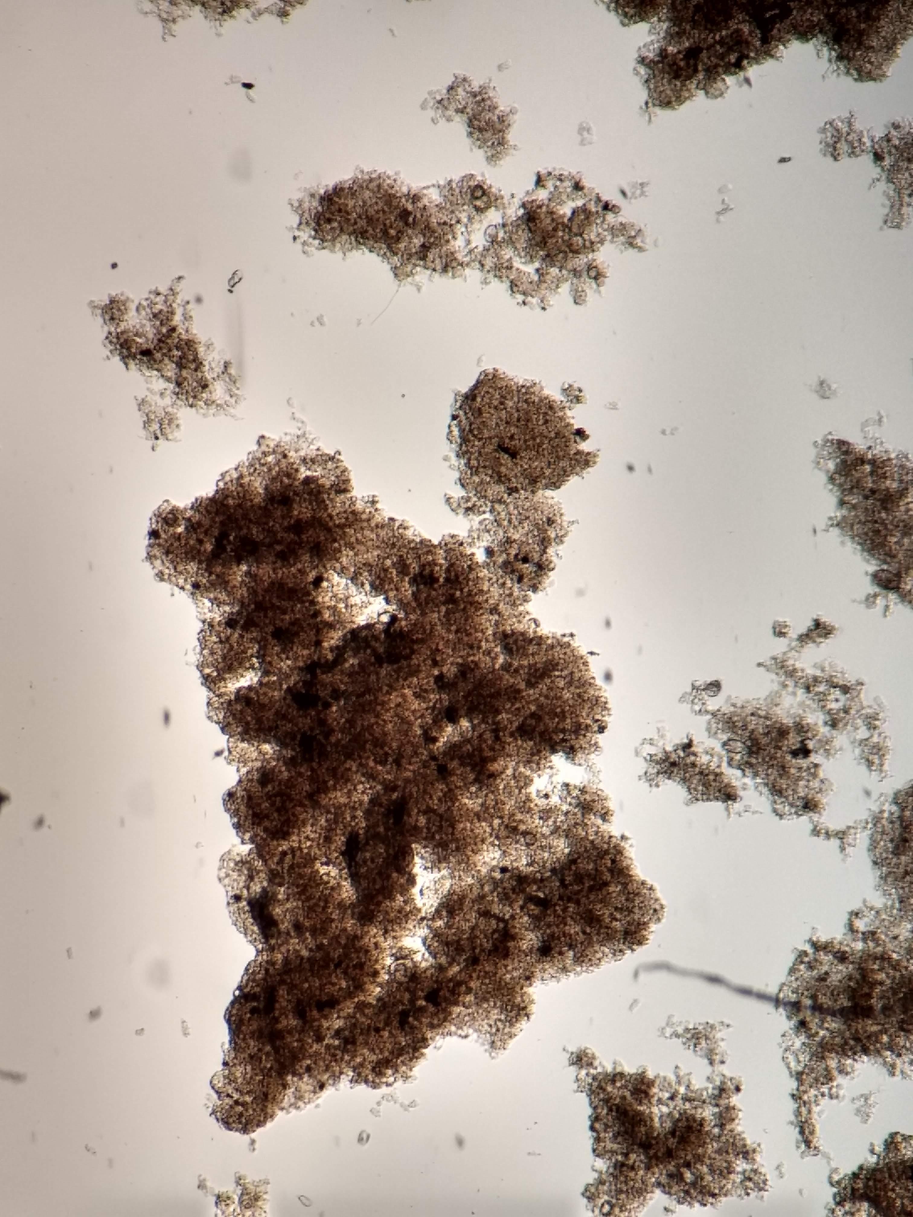 Característica do floco biológico