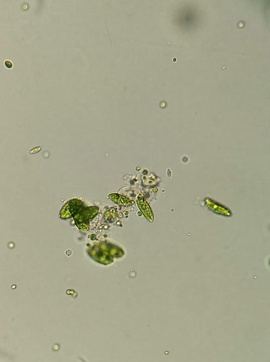 Detecção de algas