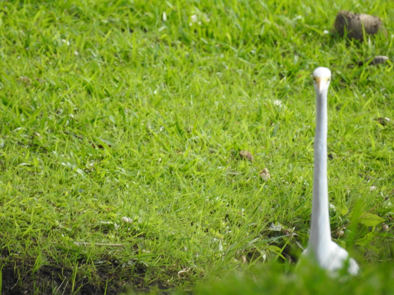 Animais aproveitam a Lagoa em BH, Enzilimp
